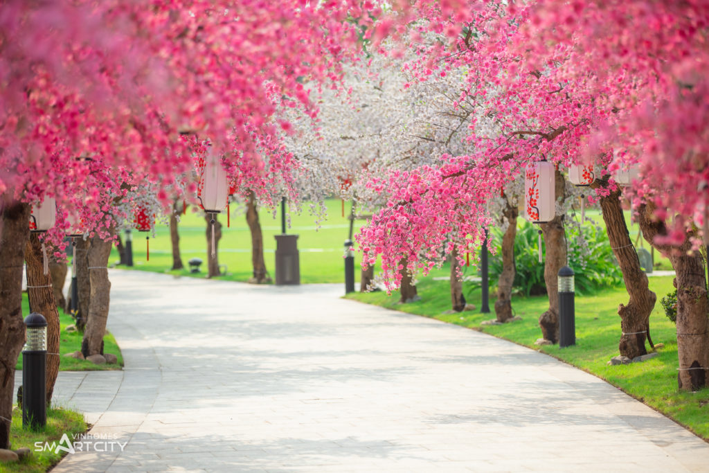Con đường hoa anh đào trong khu đô thị Vinhomes Smart City