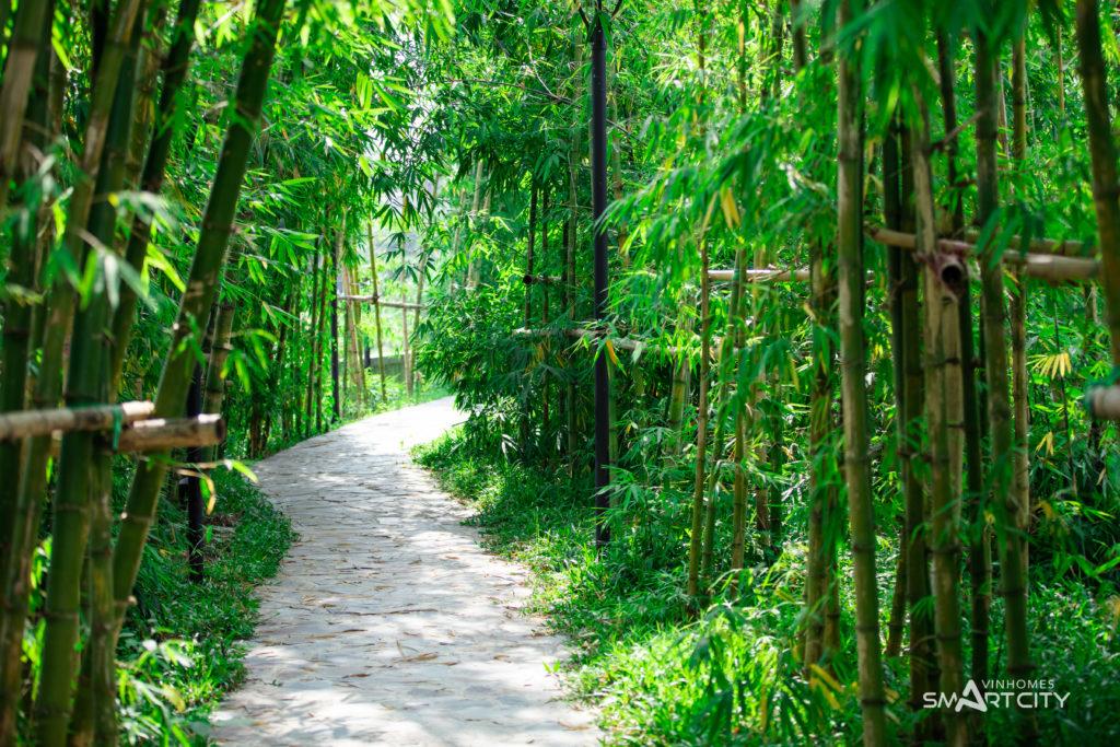 Rừng tre tại vườn Nhật Vinhomes Smart City